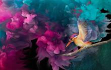 Bird View with Colors POP Wallpaper